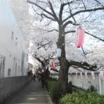 早稲田1丁目の神田川沿いの道