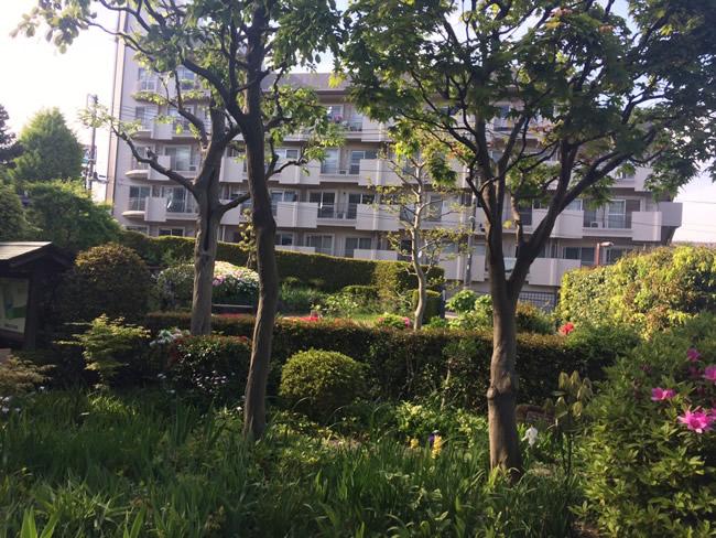公園から見た住宅街