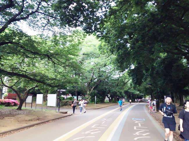 自然がいっぱいの駒沢公園