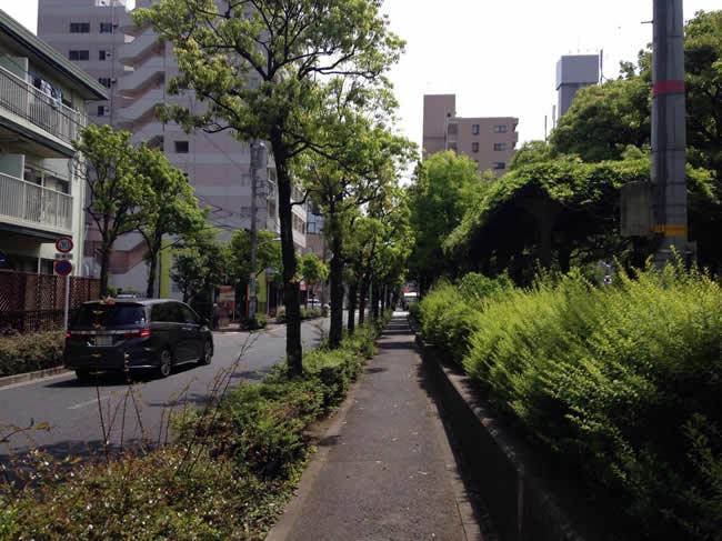 緑が多い歩道