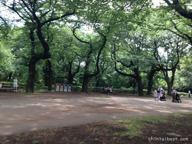石神井公園にきた