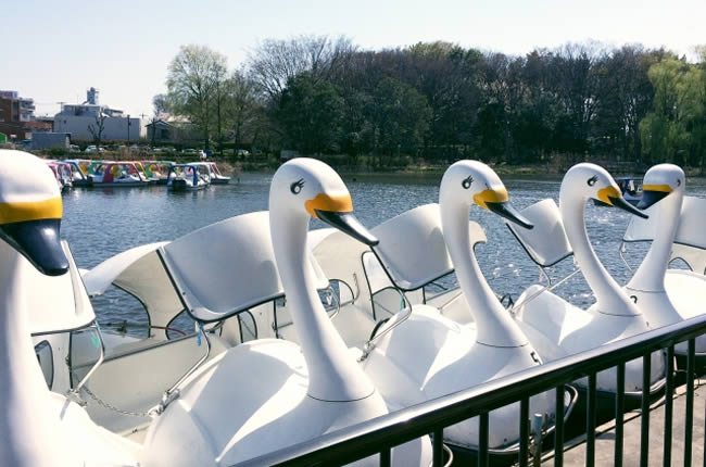 石神井公園のボート