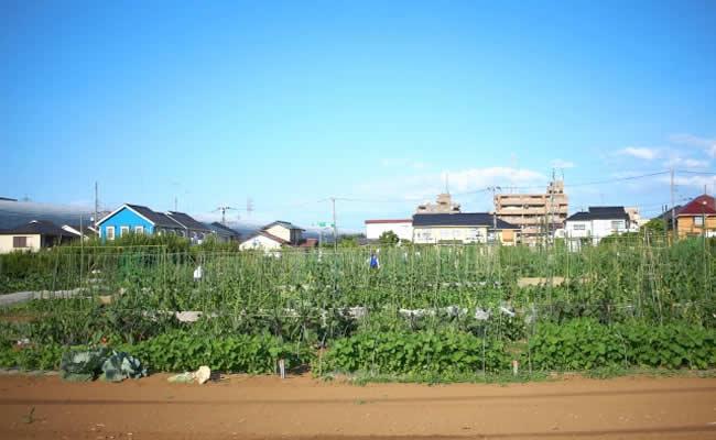大泉学園の畑
