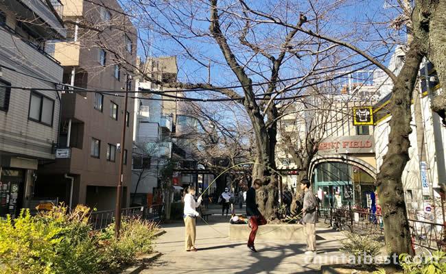 呑川緑道では春には桜のトンネルが楽しめます