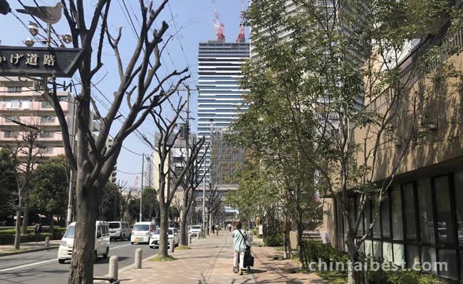 マンション前の歩道は樹木も多く、広くて歩き易いです。