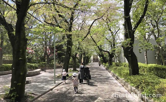 緑溢れる並木道です。