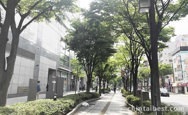 歩道に街路樹があり歩きやすいです。
