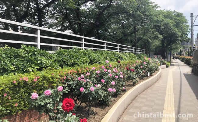 花と緑溢れる遊歩道