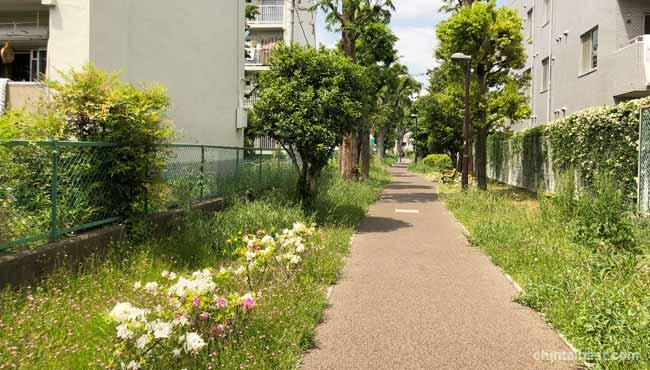 緑道は散歩にピッタリです