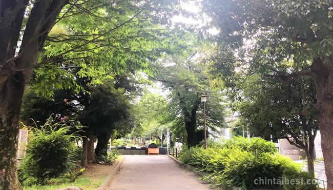 並木道が続く緑道