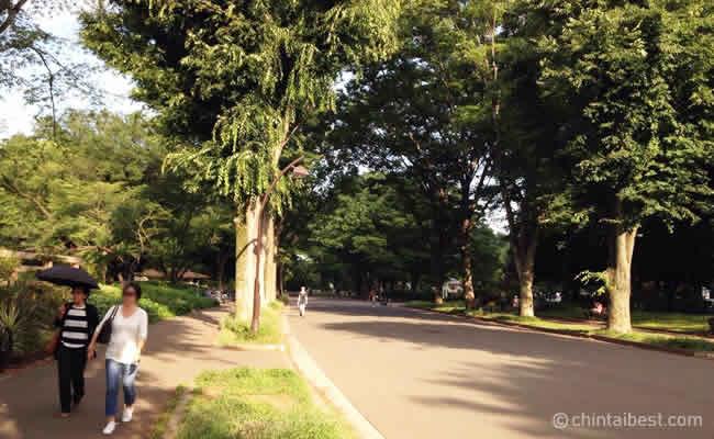 ▲駒沢公園