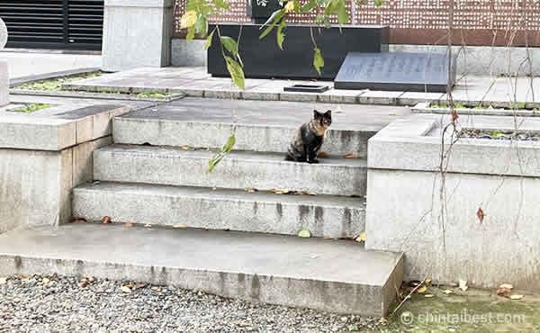 吉祥寺にいた猫