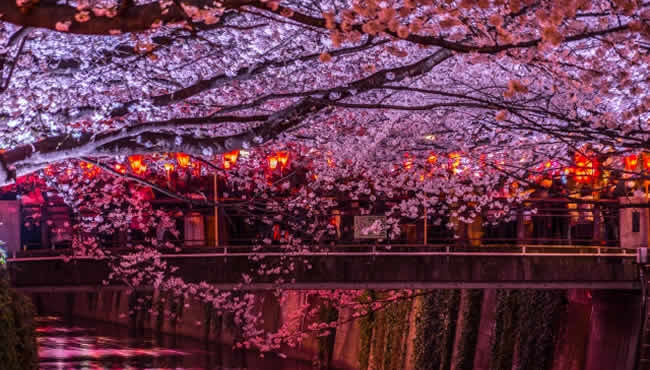 中目黒の夜桜