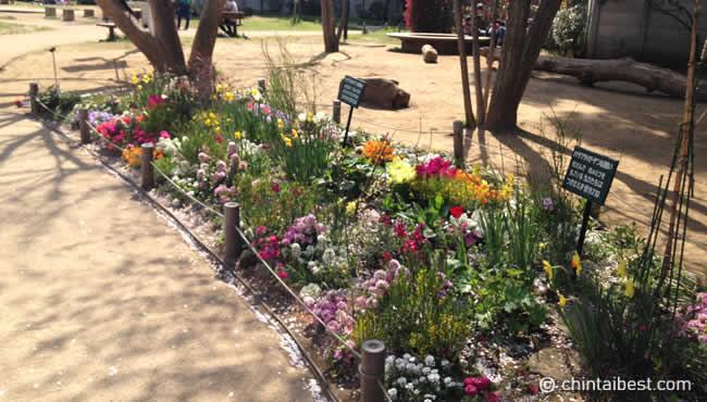 公園内に咲いていた花。色とりどりで綺麗です。