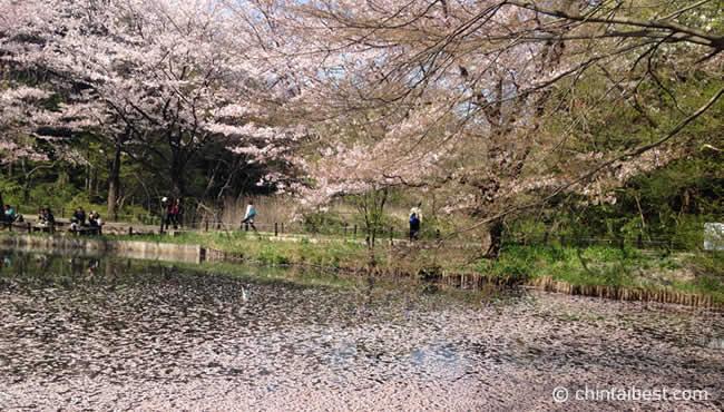 桜が散りかけでしたが、散った桜が水面に浮かんで、とても綺麗でした。